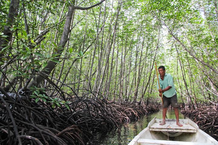 mangrove-resoration-nusa-lembongan-indo-ocean-project