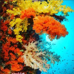 colourful-coral-raja-ampat-indo-ocean-project